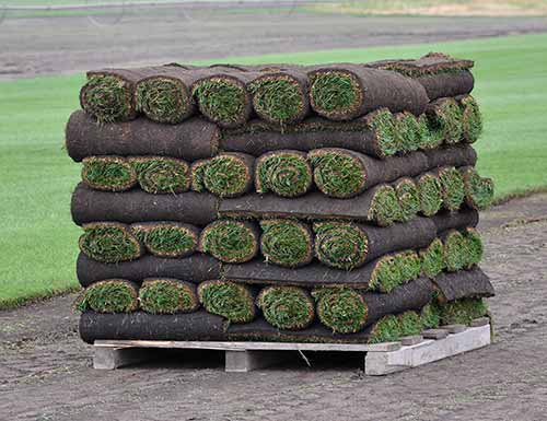 Shellview Sod